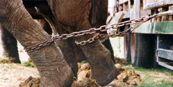 Save Circus Animals