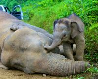 Demand justice for the 14 elephants poisoned to death in Sabah!