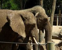 URGENT ACTION NEEDED to keep Elephant companions of more than 30 years together