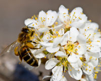 USDA: Don't Put Corporate Interests Over Bee Lives