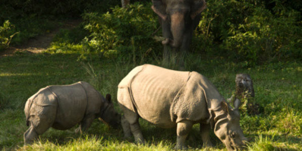 India: Implement a Rhino Conservation Plan!