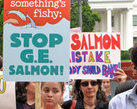 Stop Genetically Engineered Salmon From Reaching Your Plate!