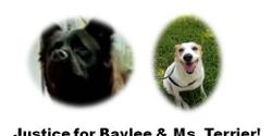 Justice for Baylee & Miss Terrier - Please help raise awareness of horrific sexual animal abuse
