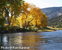 We Want Healthy Rivers - Prioritize Water Conservation!