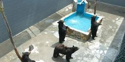 Save Bears From Cruel Confinement