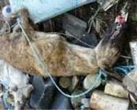 STOP GREYHOUND CRUELTY