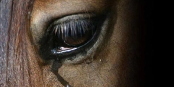 BAN CRUELTY TO HORSES DURING TRANSPORT AND IN SLAUGHTERHOUSES