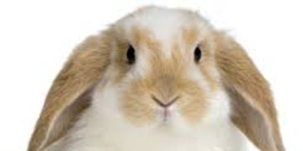 Urge Australia to Pass the Bill for Ban on Animal Testing