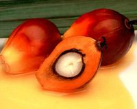 Help Stop the Use of Palm Oil!
