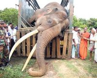 No Profit from Tusks of Dead Elephant!
