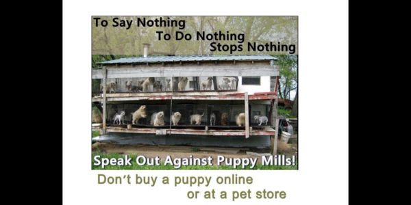 petition: Demand stiffer laws for Amish abused animal puppy
