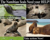 Stop the Seal Hunt in Namibia