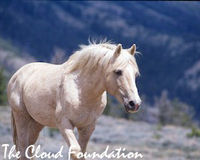 Tell Interior Secretary to Dump Pro-Wild Horse Slaughter Appointee
