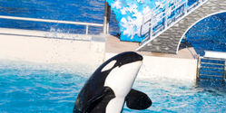 SeaWorld: Stop Giving Drugs to Orcas!