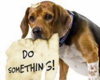 Stop aux massacres de chiens en inde 615643-1216188373-main