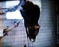 Horrific crime in a slaughterhouse in Bursa (Turkey): ask the Mayor to take action