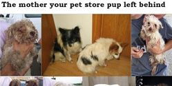 Stop pet stores from buying dogs from puppymills