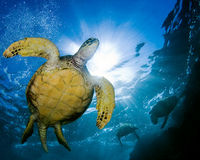 Help Save Sea Turtles in Gulf of Mexico