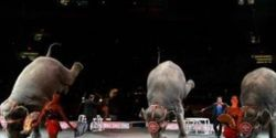 End Traveling Circus Animals!