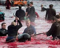 LEGAL Whale & Dolphin Slaughter In The E.U?