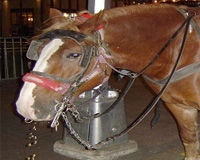 Stop Abuse of New York City Carriage Horses