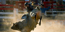 Ban South African Rodeo Brutality!