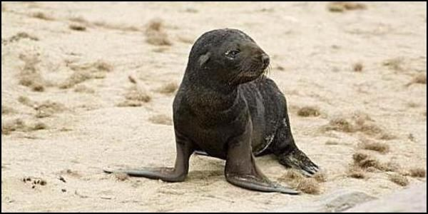 Stop the Namibia Fur Seal Slaughter