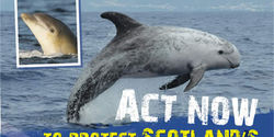 Help Protect Whales and Dolphins In Scotland