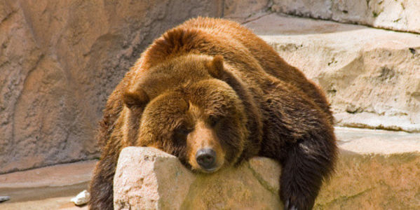 Stop Bear Pit Cruelty Nationwide!