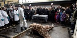 Marius The Giraffe's Murder Must Be Avenged!!