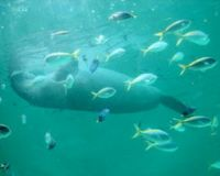 Call for Immediate Implementation of the IUCN Resolution for Dugong Conservation