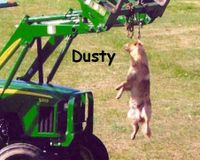 Justice for Dusty!