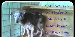 Save the Italian dogs from starvation and sufferance