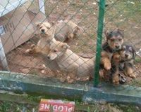 Help us to stop the legal killing of dogs in the city of Porec in Croatia ( EN,IT ,CZ)