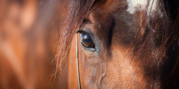 Protect Horses: Stop the Cruel Practice of Soring