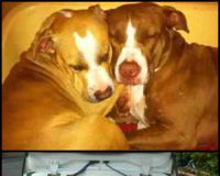 Help Save Jessica and Big Betty! BSL needs to STOP.