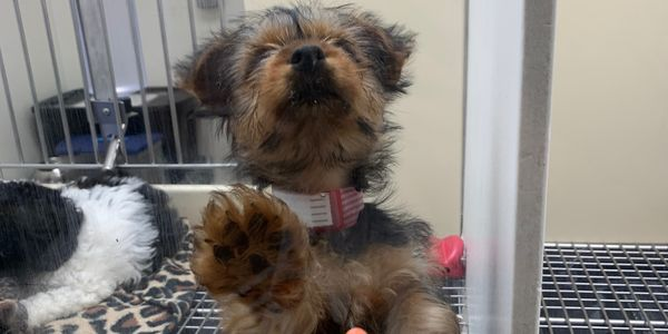 petition: LOWER THE PRICE OF PUPPIES BEING SOLD IN STORES
