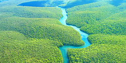 Stop The Belo Monte Dam - Save the Rainforest...