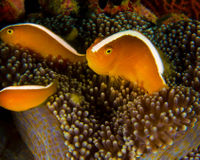 Indonesia - Regulate the Aquarium Trade