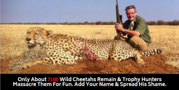 Trophy hunter with dead cheetah