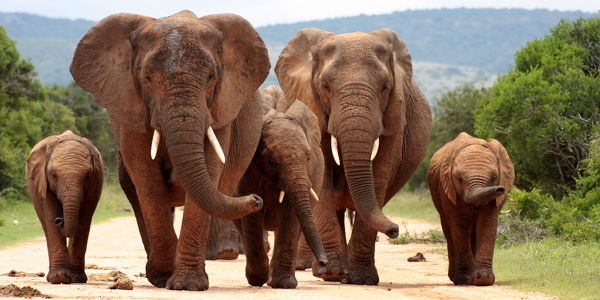 Tell Congress To Fight Wildlife Trafficking