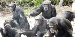 Citigroup: Stop Donating to the New York Blood Center until it Reinstates Funding for Abandoned Chimps