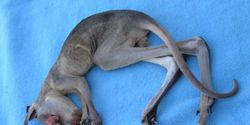 URGENT - Stop the killing of kangaroo babies like this.