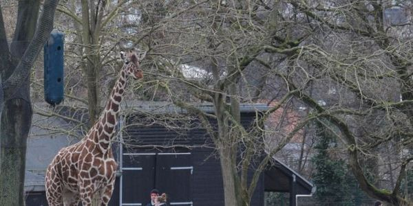 Save Animals At Copenhagen Zoo!