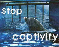 END DOLPHIN CAPTIVITY IN EU
