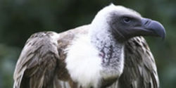 Stop Vulture Funds Preying on Developing Nations from Jersey