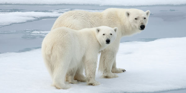 Help Save the Polar Bear
