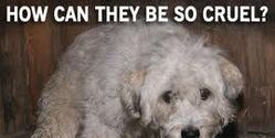 PLEASE HELP TO STOP PET SHOPS FROM SELLING ANIMALS