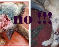 Protest against the Italian Dog Kennel Hells !