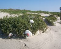 Don't Limit Local Rule on Plastic Bags in Texas